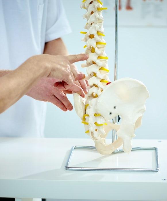 Chiropractor explains patient using plastic model